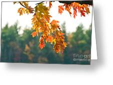The Last Bit Of Fall Greeting Card