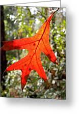 The Last Leaf Greeting Card