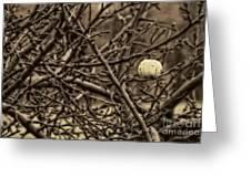 The Last Little Apple On The Tree Greeting Card