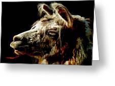 The Legendary Llama  Greeting Card