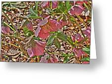 The Lenten Rose Greeting Card