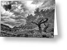 The Light On The Cottonwood Bw Greeting Card
