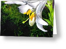 The Lily Greeting Card