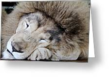 The Lion Sleeps Greeting Card