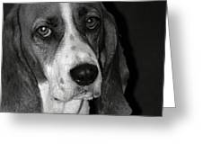 The Little Dog Greeting Card