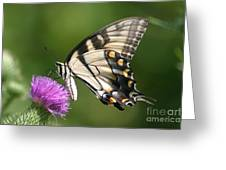 The Love Of Thistle Greeting Card