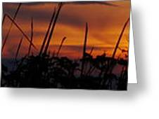 The Marsh At Sunset Greeting Card