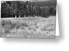 The Meadow Black And White Greeting Card