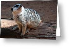 The Meercat  Greeting Card
