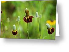 The Mexican Hat Flower Greeting Card
