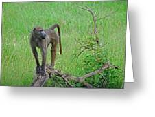 The Mighty Baboon Greeting Card