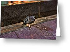 The Mighty Pigeon Greeting Card