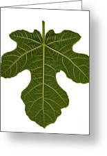 The Mission Fig Leaf Greeting Card