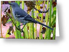 The Mockingbird  Greeting Card