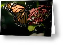 The Morning Monarch Greeting Card