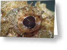 The Mosaic Eye Of The Venemous Greeting Card