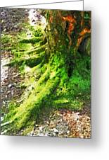 The Moss Covered Roots Greeting Card