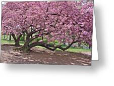 The Most Beautiful Cherry Tree Greeting Card