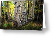 The Multiple Trunk Aspen Tree Greeting Card