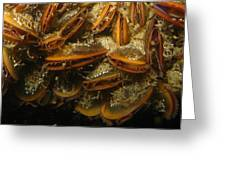 The Mussel Group Greeting Card