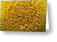 The Nature Of A Sunflower Greeting Card