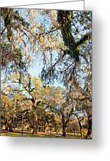 The Oaks Of City Park Greeting Card