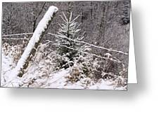 The Old Fence - Snowy Evergreen Greeting Card