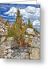 The Old Tree And The Cliff Greeting Card