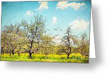 The Orchard Greeting Card by Darren Fisher