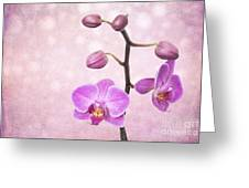 The Orchid Tree - Texture Greeting Card