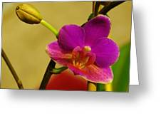 The Original Orchid Greeting Card