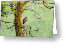 The Owls Overlook Greeting Card