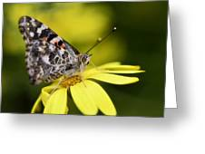 The Painted Lady And The Daisy  Greeting Card