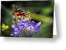 The Painted Lady Butterfly  Greeting Card