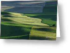 The Palouse 4 Greeting Card