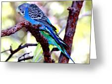The Parakeet Greeting Card