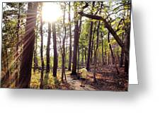 The Path Of Life Greeting Card