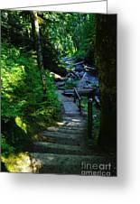 The Path To Iron Creek  Greeting Card