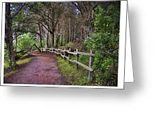 The Path To The Woods Greeting Card