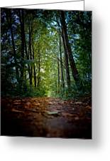 The Pathway In The Forest Greeting Card