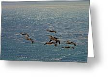 The Pelicans Hunting Greeting Card