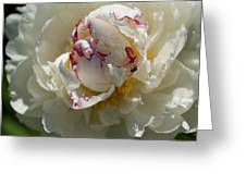 The Peony And The Ant Greeting Card