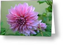 The Pink Dahlia-flower2 Greeting Card