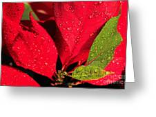 The Poinsettia Greeting Card