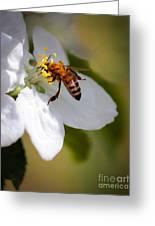 The Pollinator Greeting Card