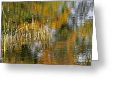 The Pond Shallows Greeting Card