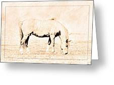 The Pony Greeting Card
