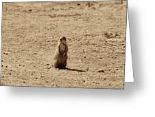 The Prairie Dog Greeting Card