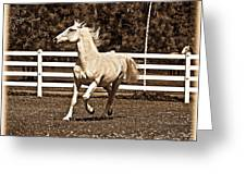 The Prance Greeting Card
