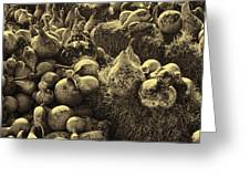 The Produce Of The Earth In Sepia Greeting Card